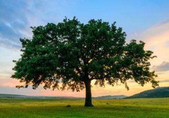 Как создать полное семейное древо?