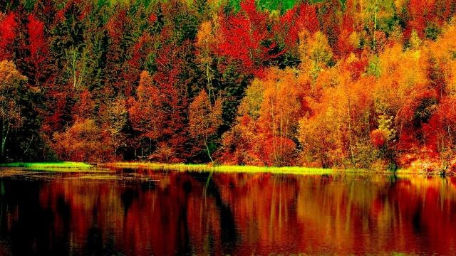 Любовь к лесу
