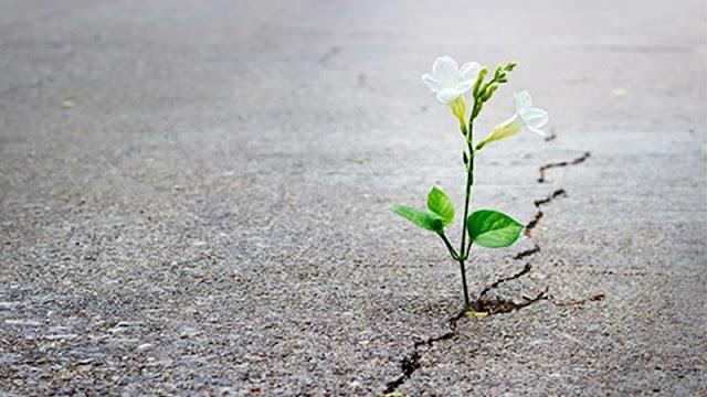 Как развить настойчивость в достижении результата?